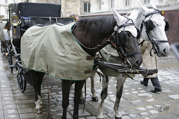 Beautiful horses and carriage heading to St. Peter Church. - click thumbnail image to view full size image.